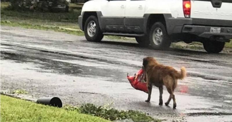 Após a passagem do furacão Harvey todos estão tentando se reencontrar, até mesmo esse cão!