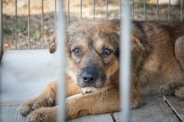 España multará con 30.000 € a las personas que abandonen a un perro