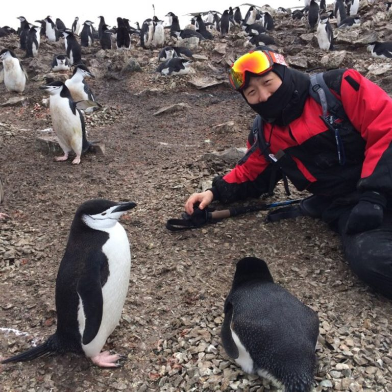 Cientistas colocam câmera em pinguins e as imagens são incríveis