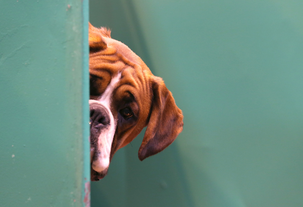 Banho e tosa aos pets promete ficar ainda mais seguro