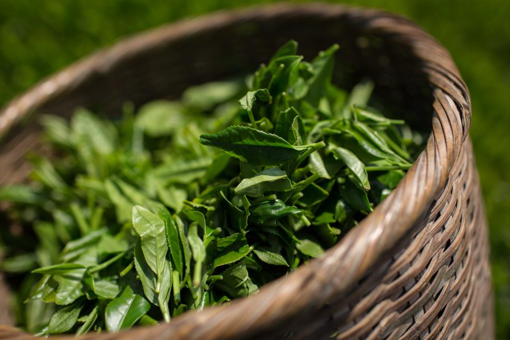 Combinações de chás que dão uma forcinha na dieta