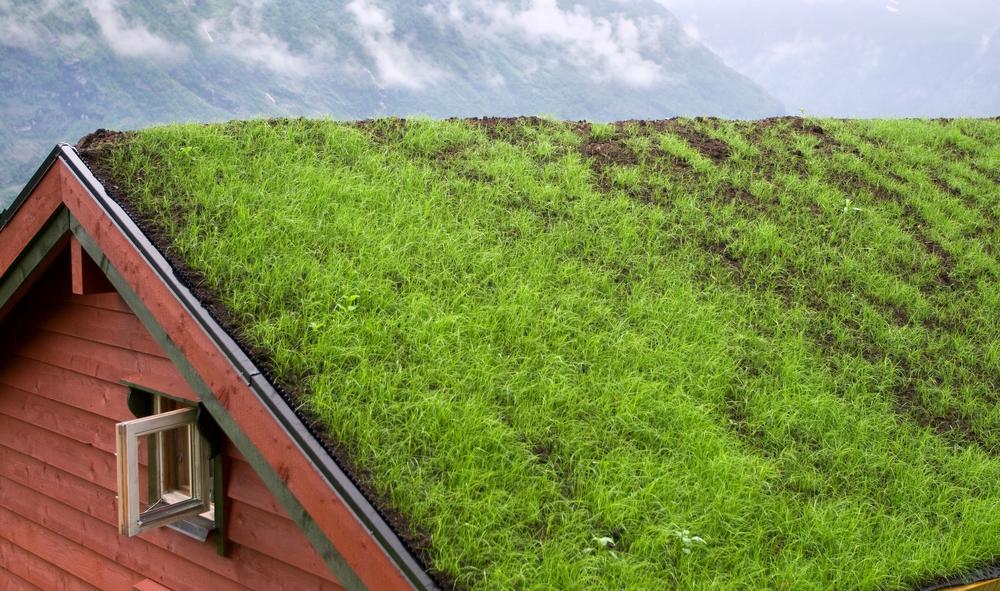 Telhados verdes: a ideia que pode mudar a vida nas casas
