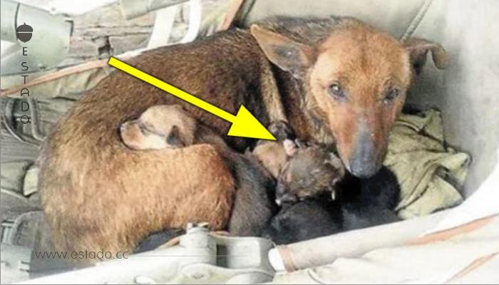 Encontró una perra callejera con 6 cachorros – cuando se acerca ve una mano que sale entre ellos