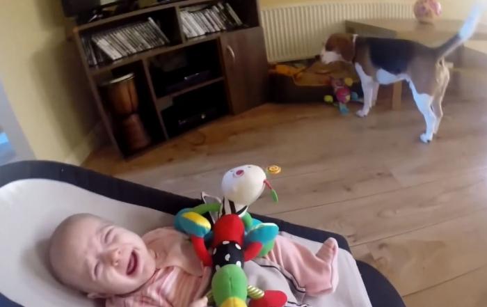 Este perro le robó un juguete a un bebé e hizo algo genial para disculparse