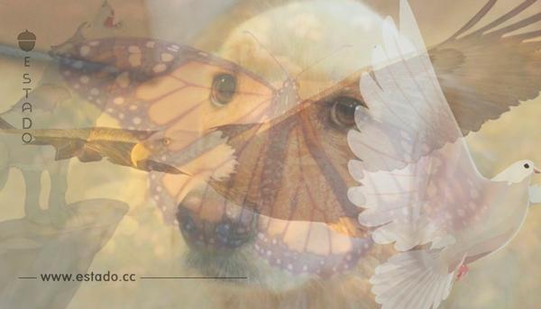 El primer animal que veas revelará un gran secreto de tu persona