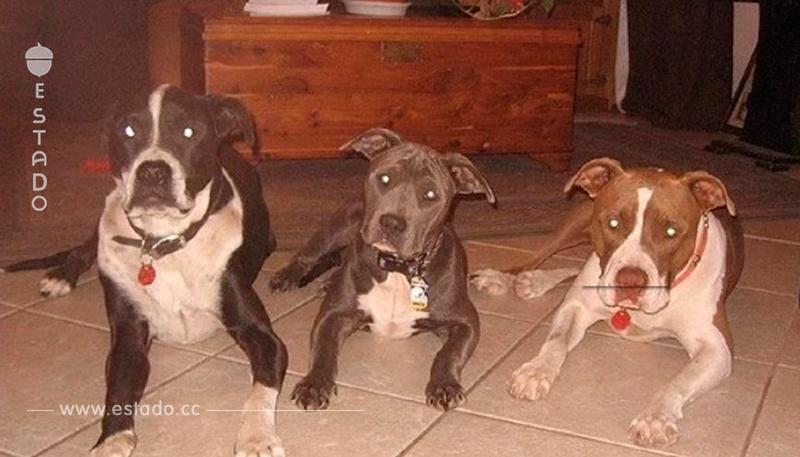 Madre dejo a su bebé de 3 semanas en una habitación con tres pit bulls. Cuando regresó, vio a los perros acostados cerca del cuerpo sin aliento