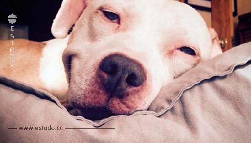 Un hombre recogió a un perro callejero. ¡Unos días más tarde no se creía lo que veía con sus propios ojos!