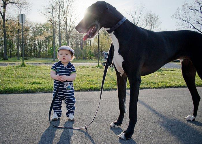 Dicen que un perro grande es un perro malvado. ¡Pero es posible que tu hijo encuentre un lenguaje en común con él!