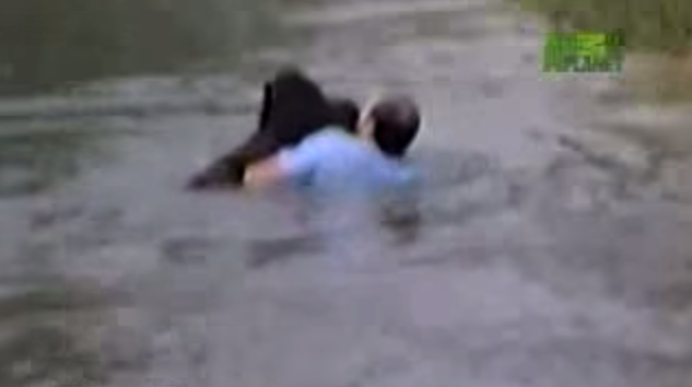 Un hombre se lanzó al agua en un zoo para salvar a un chimpancé que se ahogaba