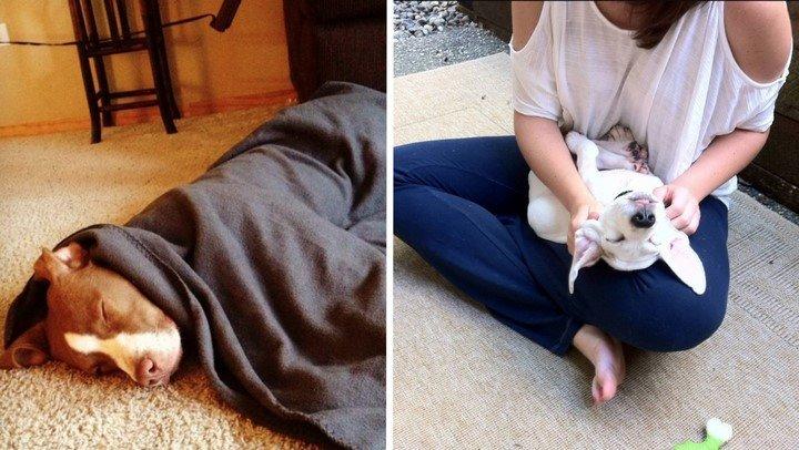 28 mascotas que aprenden el significado de la vida en su hogar adoptivo