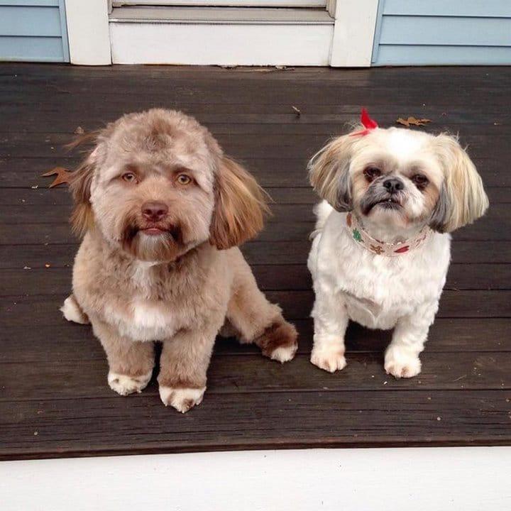 ¿La cara de este perro te parece conocida?