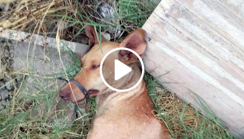 Rescatan en el último segundo a perro con el hocico atado