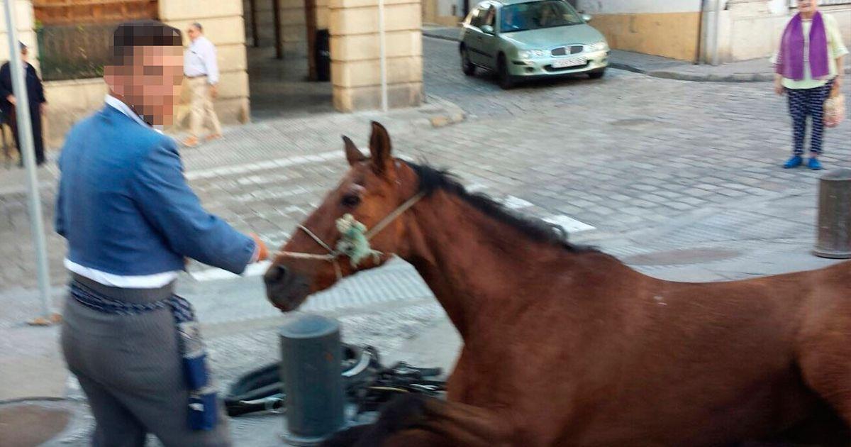 Se desploma un caballo tras 15 horas de trabajo en Jerez - La nube de algodón