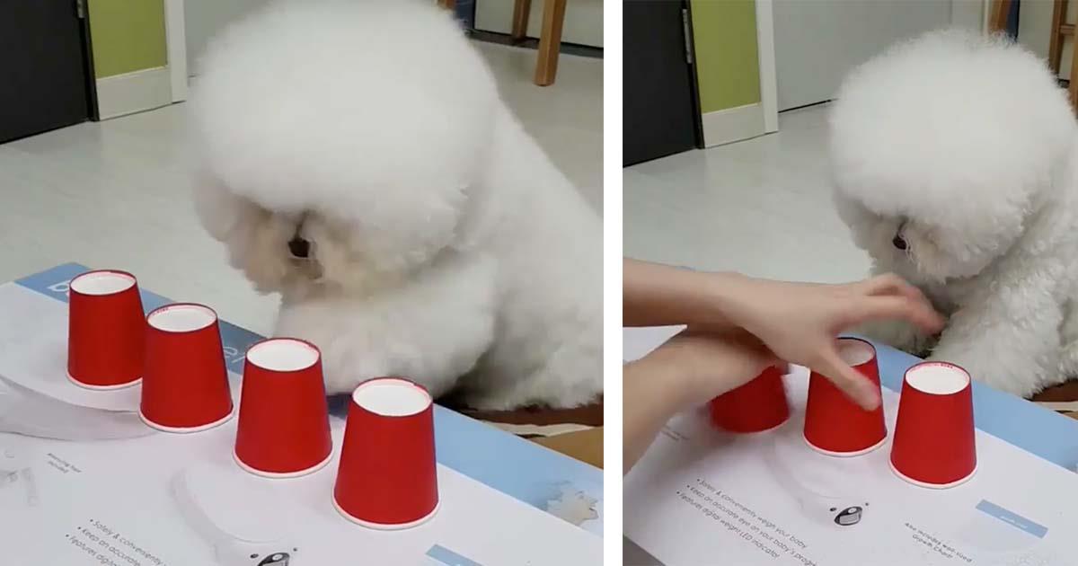 El perro más listo de Internet deja a muchos asombrados