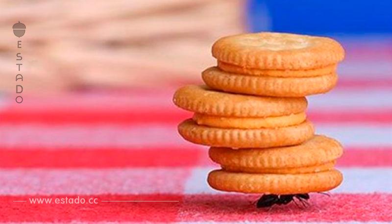 Extermina las malvadas hormigas que invaden tu hogar con este remedio casero