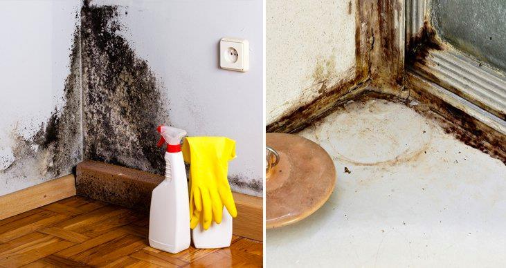 Cómo eliminar el moho con 1 solo producto de forma natural y para siempre