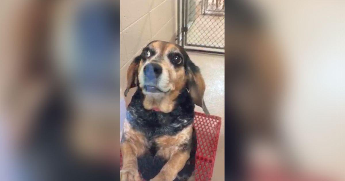 Abandona a su perra de 11 años en un refugio y pide que hagan algo horrible con ella • La nube de algodón