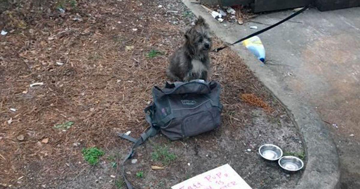 Un perro es abandonado junto a una nota y descubren que su casa está a 2.500 Km • La nube de algodón