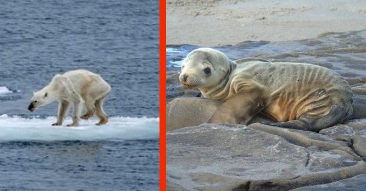 20 fotos que muestran los estragos de la degradación del medio ambiente
