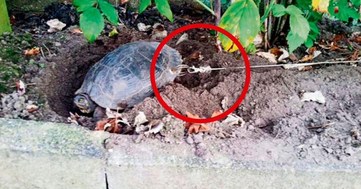 Le perforan el caparazón a una tortuga para atarla y se van de vacaciones • La nube de algodón