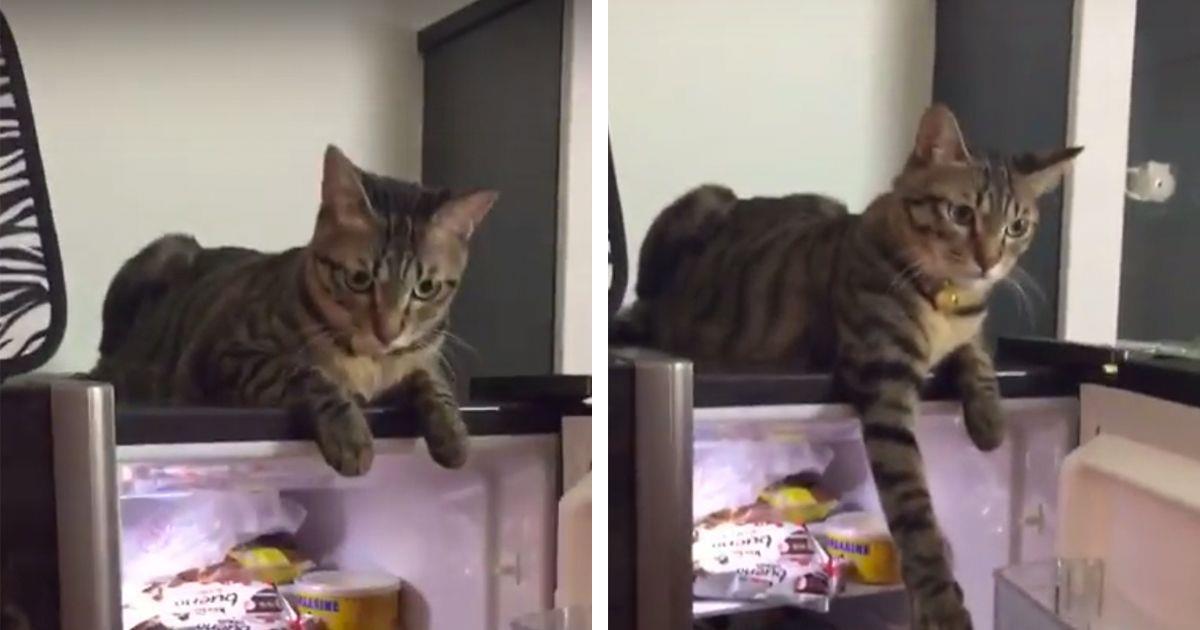 Firme reacción del gato para evitar que cierren la nevera • La nube de algodón
