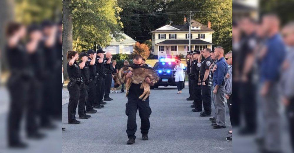 Todos los agentes del cuerpo ofrecen sus respetos a un perro policía con cáncer en su emotiva despedida • La nube de algodón