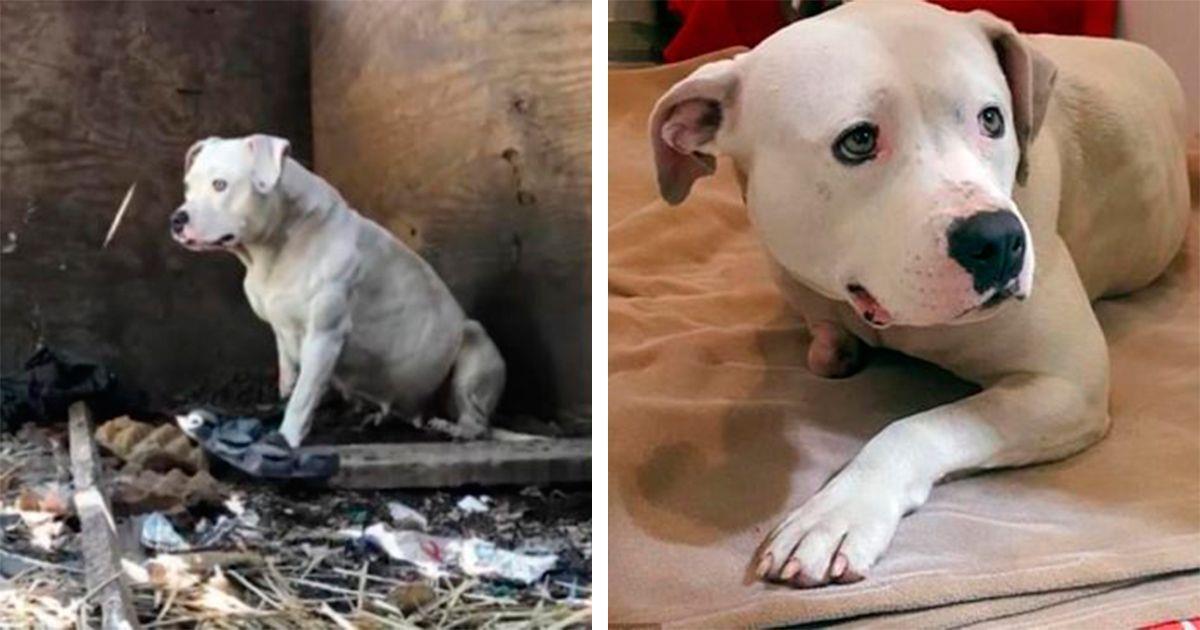 Encadenada durante 5 años, hasta que se mordió su propia pata para liberarse • La nube de algodón