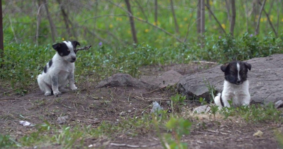 Estos cachorros buscan caricias y cariño, pero está totalmente prohibido tocarlos • La nube de algodón