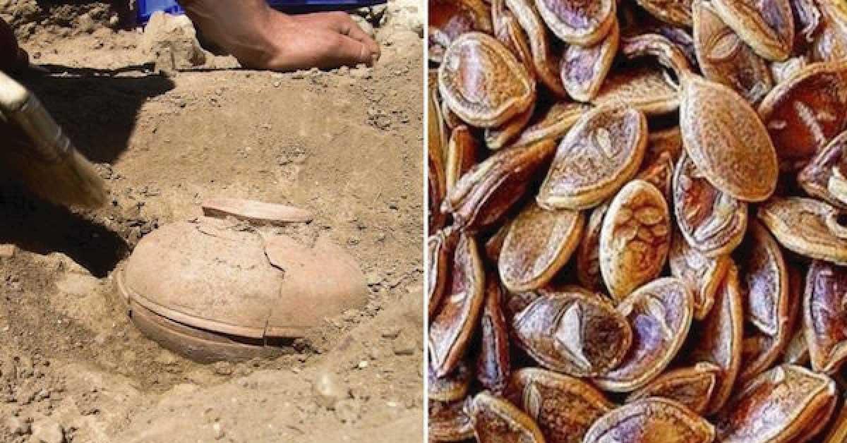 Estudiantes encontraron semillas de 800 años de antigüedad y decidieron cultivarlas