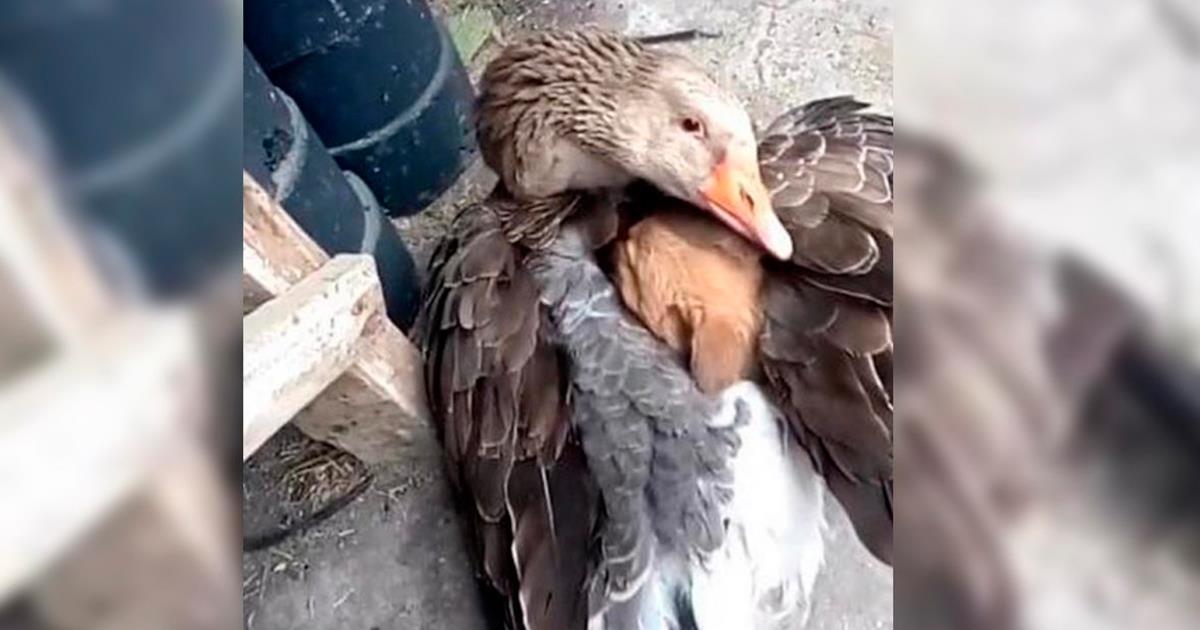 Pato abraza un perrito para calentarlo. Le da cariño luego de ser abandonado en la calle