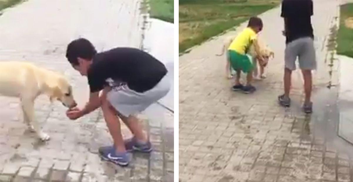 Niños se encuentran a un perro callejero y su reacción nos da una lección a todos • La nube de algodón