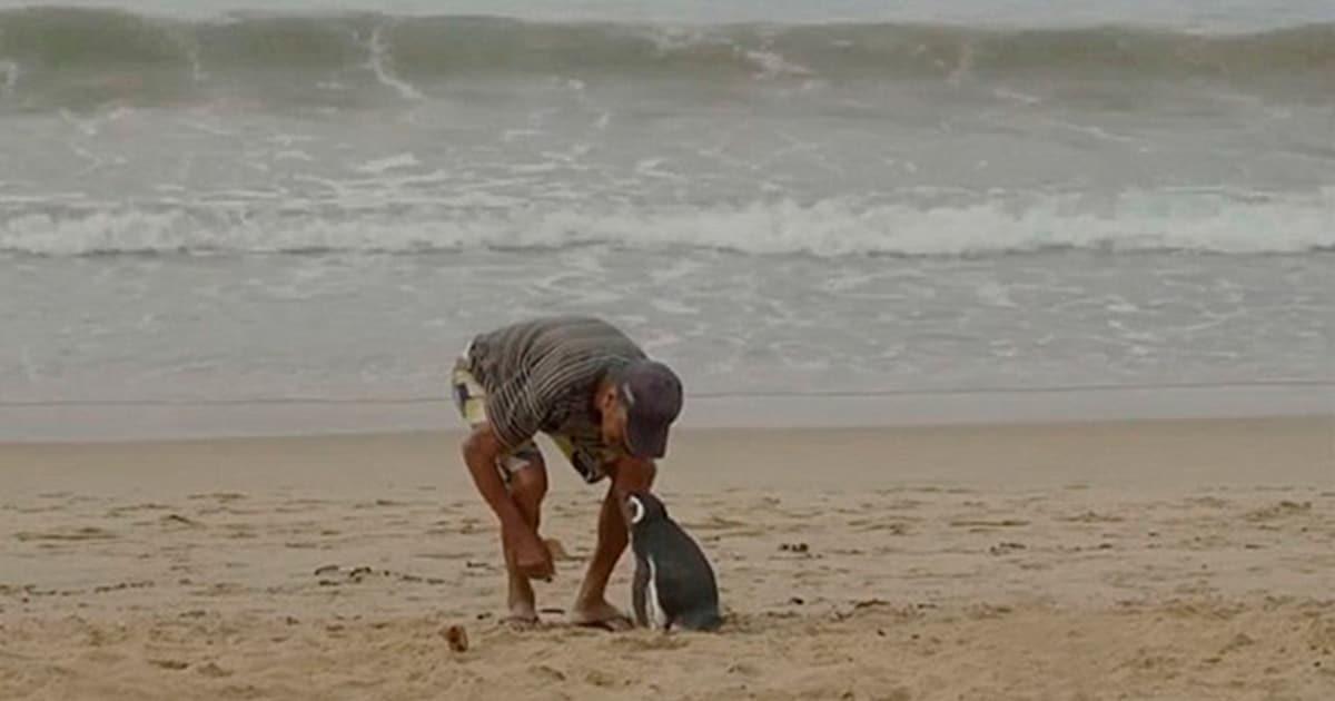 Pingüino nada 8000 km cada año para visitar a quien le salvó una vez la vida