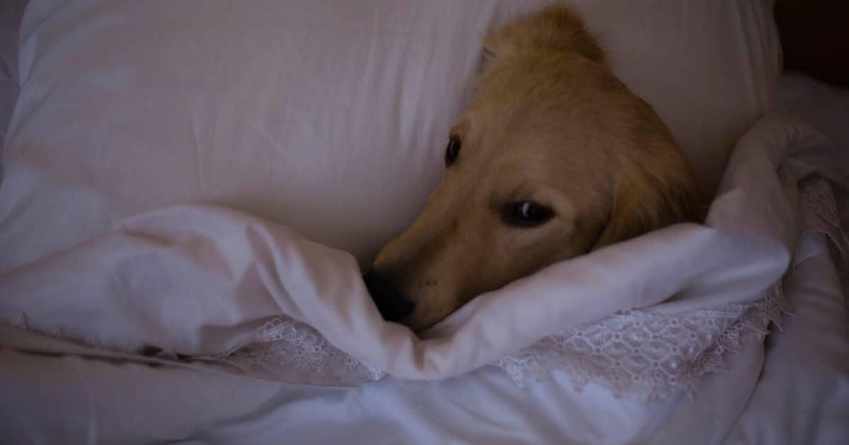 Por estas razones tu perro debería dormir junto a ti por las noches