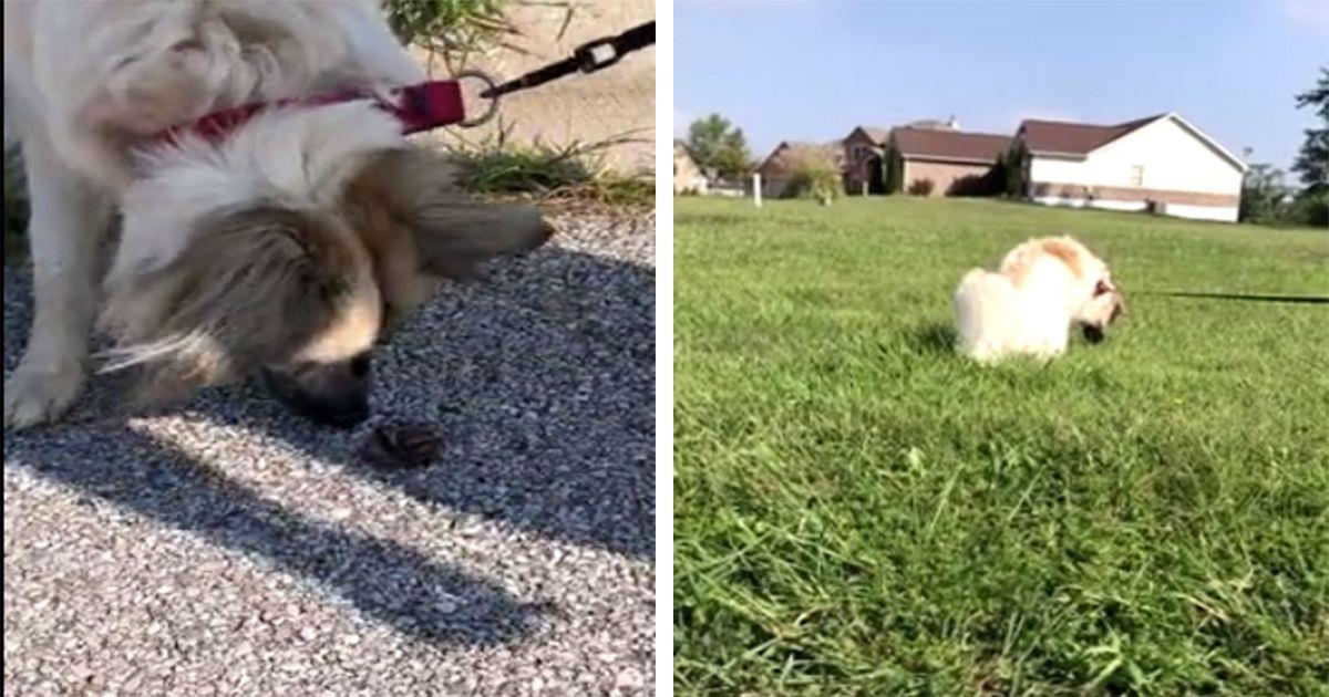 Esta perrita recoge todas la lombrices que se encuentra para devolverlas a su hábitat • La nube de algodón