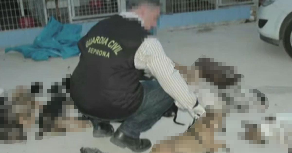 Condenan a la presidenta de una protectora por matar a 2200 animales • La nube de algodón