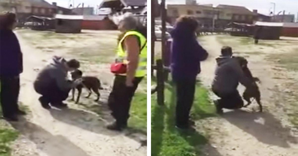 El emotivo momento en que esta perra perdida vuelva a reunirse con su dueño dos años después • La nube de algodón