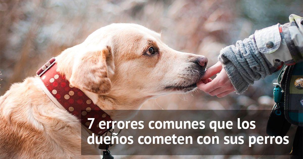 Cómo solucionar los 7 errores más comunes que cometemos con nuestros perros • La nube de algodón
