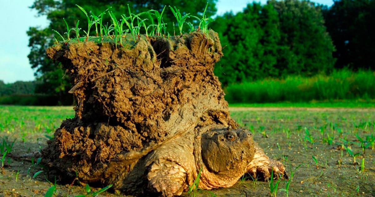 Esta curiosa foto de una tortuga con un pequeño mundo encima es real, conoce su historia