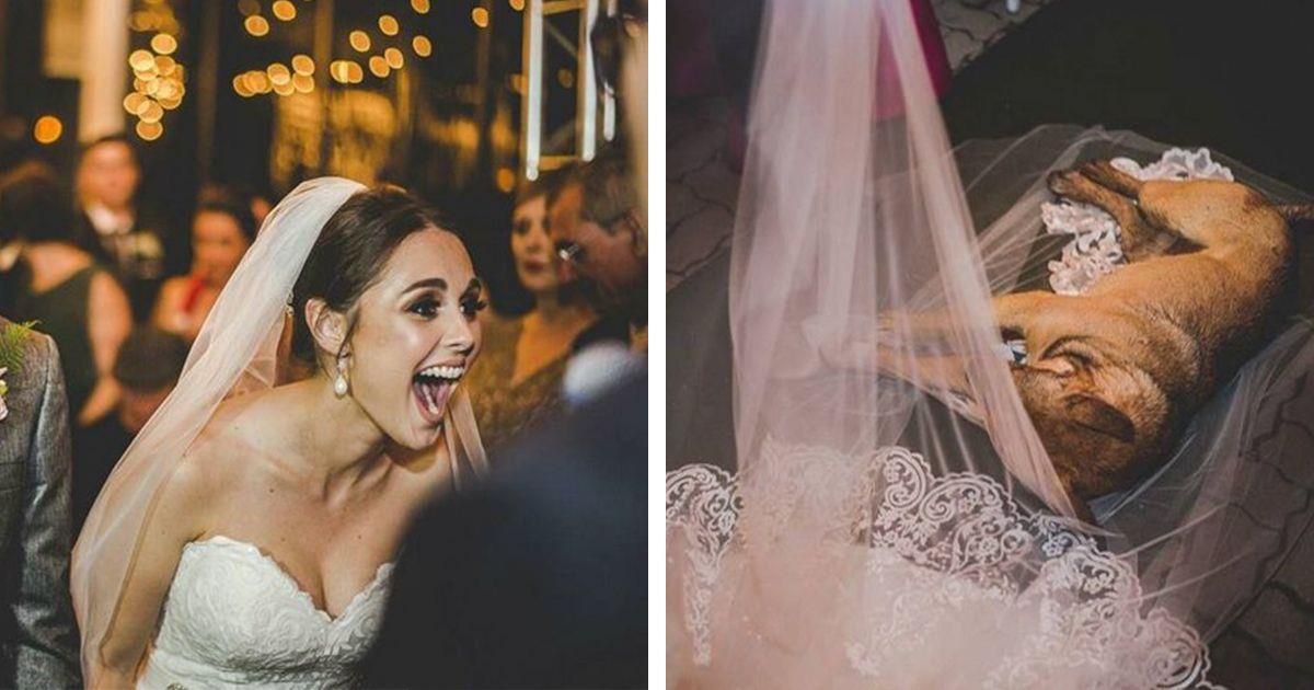 Este perro se coló por sorpresa en su boda y acabaron adoptándolo • La nube de algodón