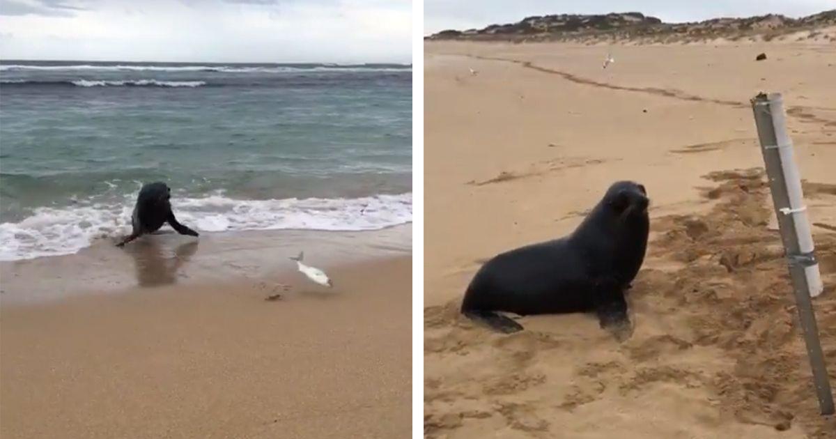 Una foca intenta recuperar los peces que está pescando una chica desde la orilla • La nube de algodón