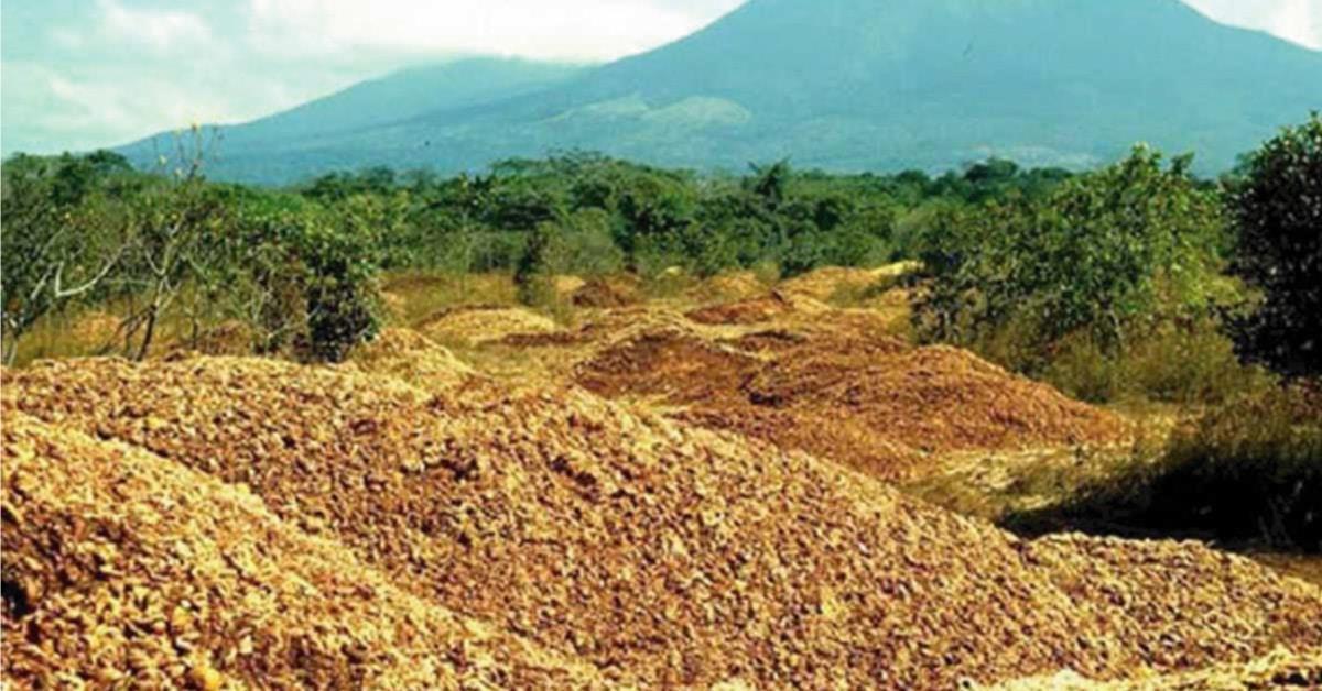Fábrica de zumos arrojó cáscaras de naranja en una zona deforestada. Así se ve 16 años después