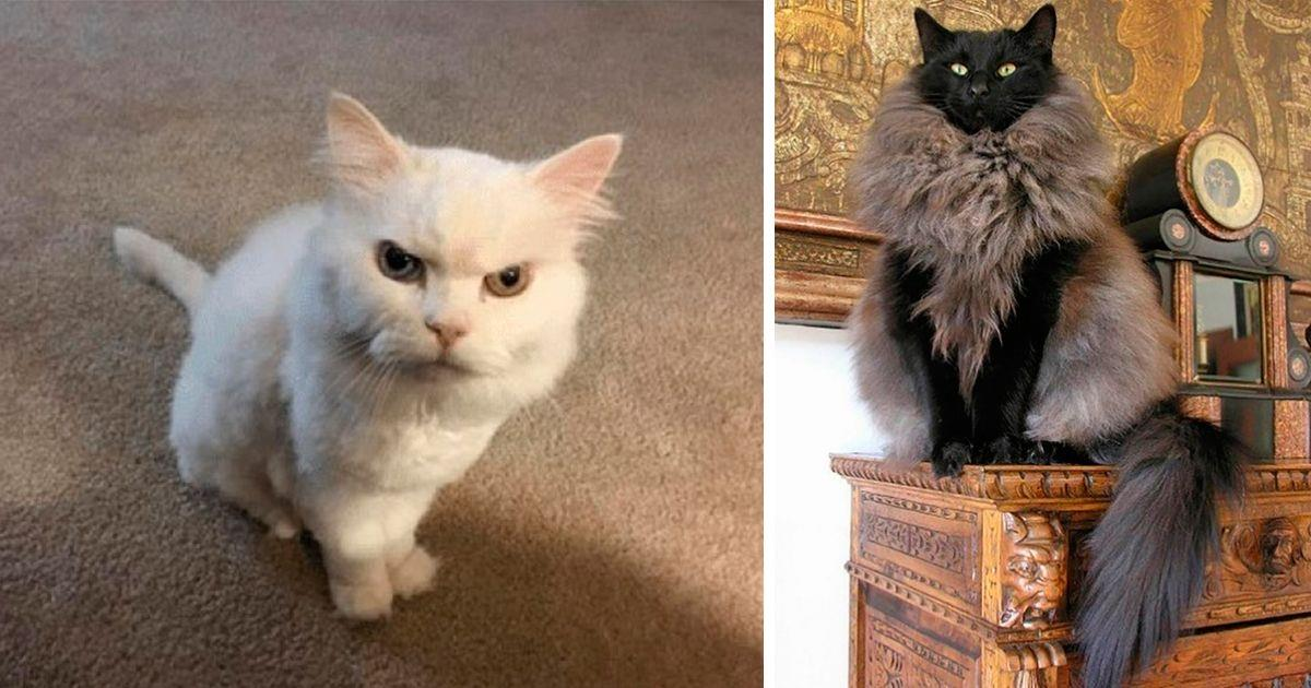 15 gatos que se creen mejor que tú • La nube de algodón