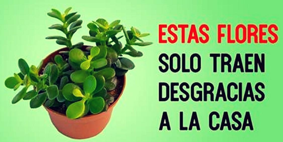 Estas plantas drenan tu energía, como vampiros. ¡Aléjate de ellas!   Hacer Juntos