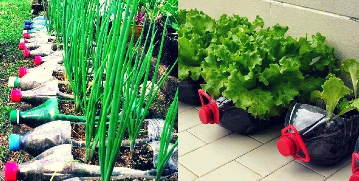 Descubre 10 alimentos que podrás cultivar en botellas de plástico.