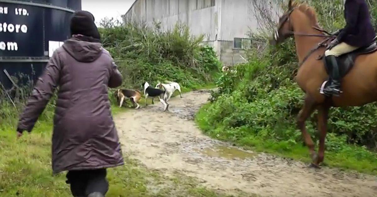 Dos mujeres arriesgan su vida para salvar a un zorro de una cacería