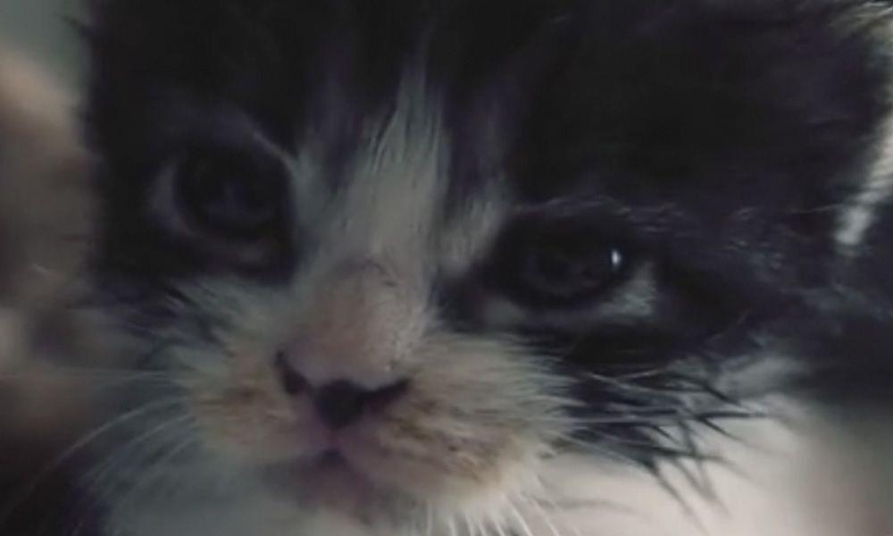 Encontraron un gatito abandonado en la basura y su caniche ocupó el papel de madre