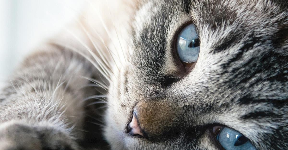 ¿Por qué los gatos son protectores de nuestro hogar contra energías negativas y fantasmas?