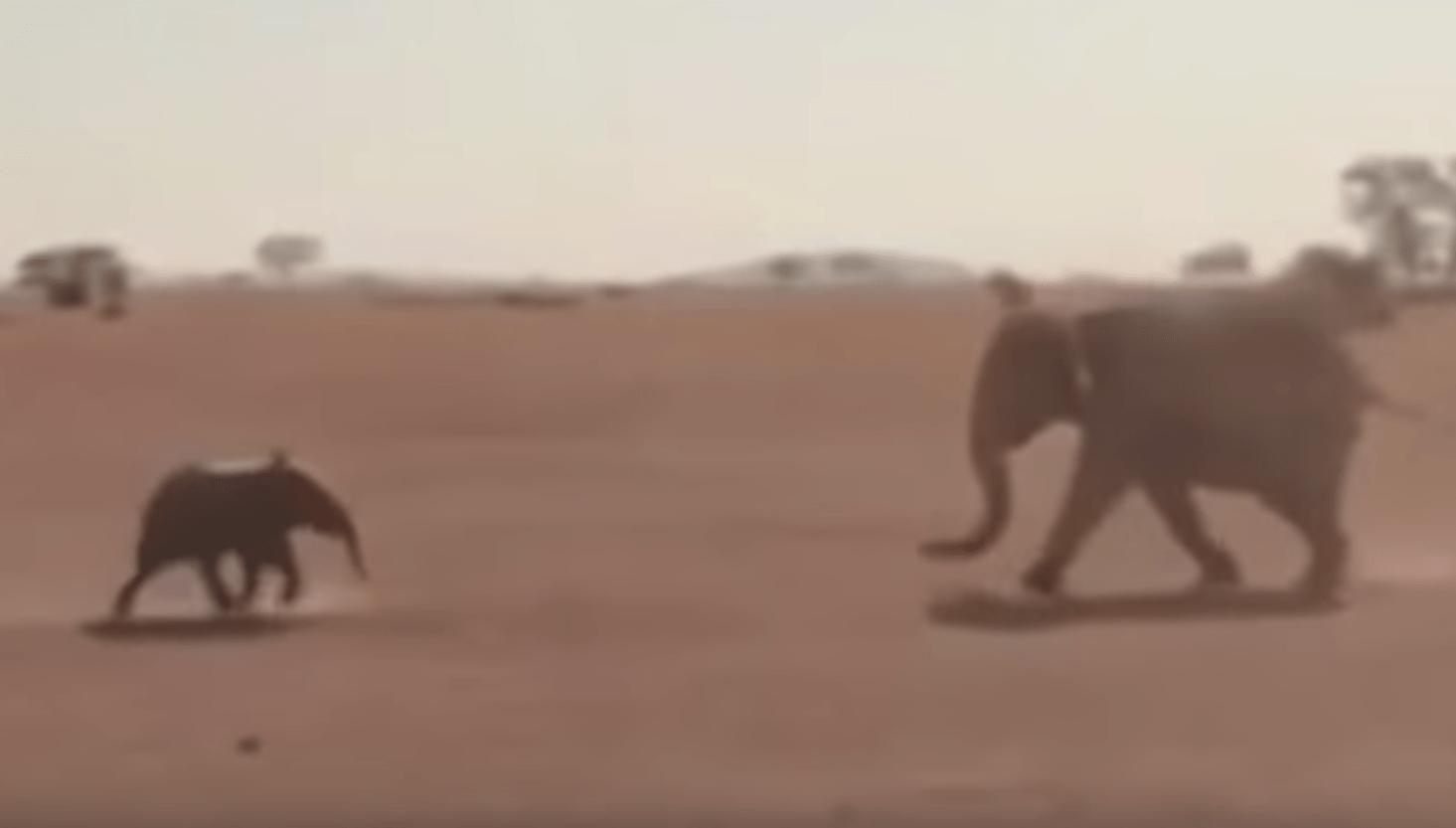 Esto es lo que ocurre cuando madres del mundo animal se reunen con sus hijos