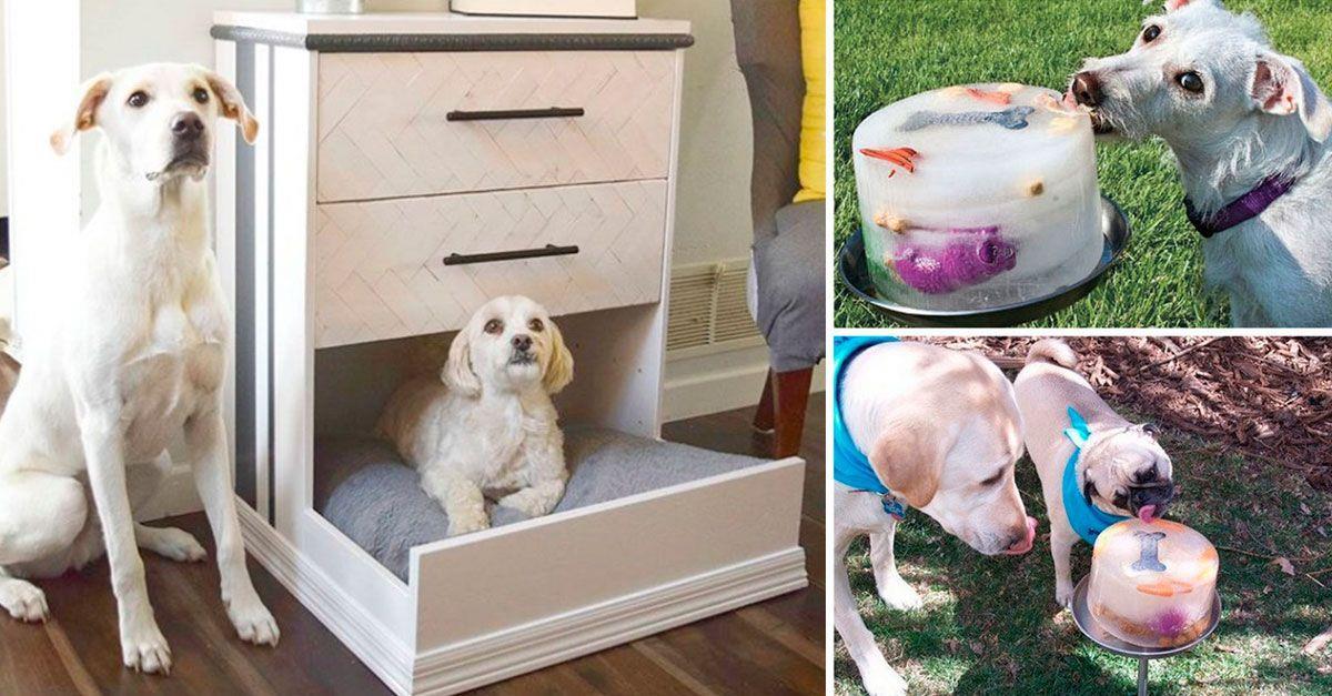 23 manualidades y recetas para hacer feliz a tu perro