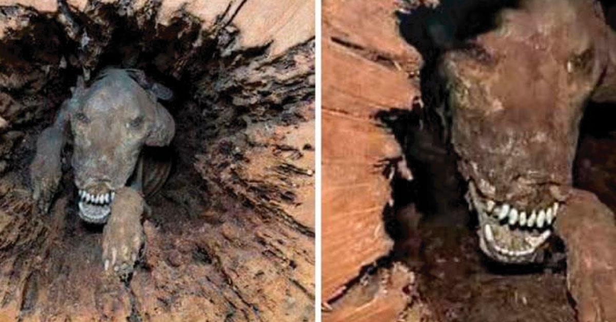 La verdad detrás del perro atascado dentro de un árbol desde hace 50 años que impactó al mundo (Fotos)